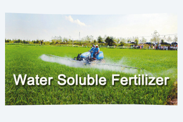 Water Soluble Fertilizer|NPK
